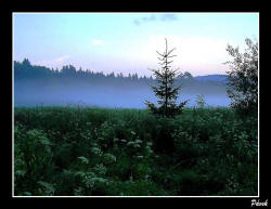 Pavel Pávek: Mlha