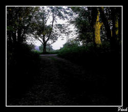 Pavel Pávek: Ráno vlese