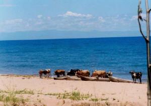 Sladkovodní jezero Malawi